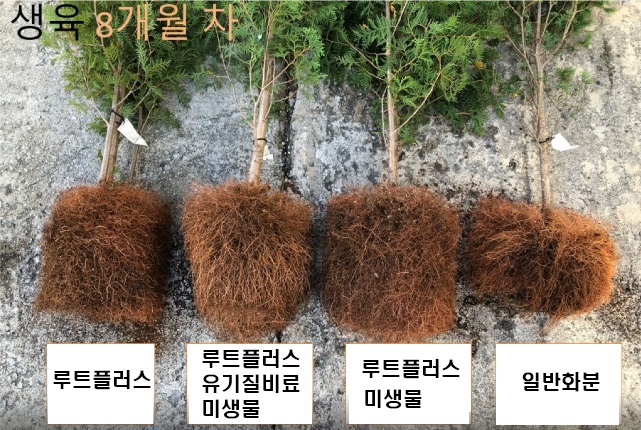 shinsung_root_2
